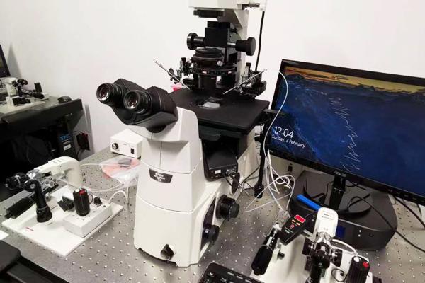 胚胎实验室2